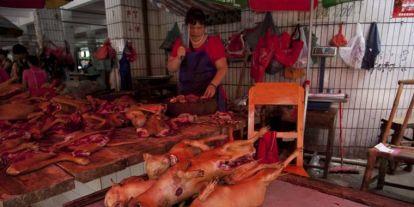 Ennyi kutyát esznek meg a kínaiak