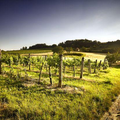 Tizenegy hazai borászat, amihez álomszép hotel is tartozik