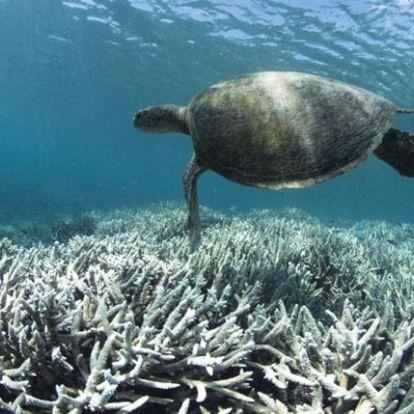 Óriási tempóban pusztul a Nagy-korallzátony