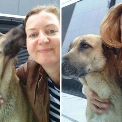 Örökbe fogadta a légiutas-kísérő a kóbor kutyát, aki rendíthetetlenül várt rá a szállodája előtt