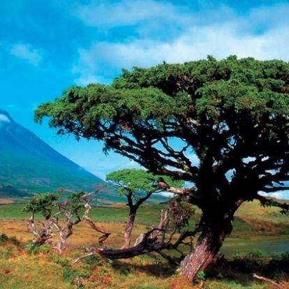 Jövő nyártól újabb Azori-szigetek fapados áron