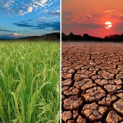 2016 volt minden idők legmelegebb éve
