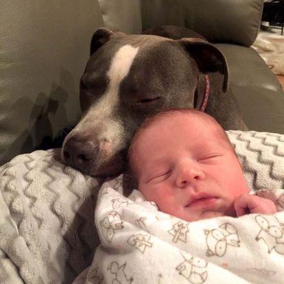 A leglelkesebb babaőrök – együtt vigyáznak a család állatai a kisbabára