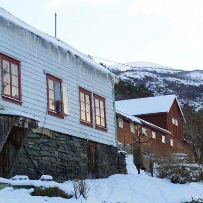 Idős nénivel barátkozott össze egy szarvas Norvégiában
