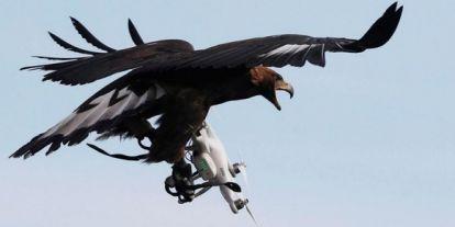 Sas fogta drón