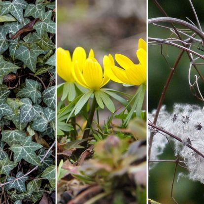 Február a kertben – mennyi a teendő a dísznövényekkel!