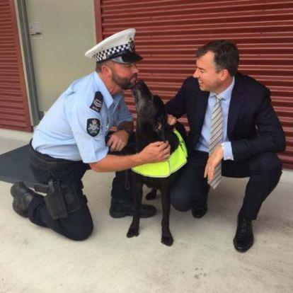 Miniszteri dicsérettel ment nyugdíjba Ausztrália legeredményesebb drogkereső kutyája