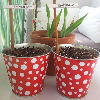 Tavaszi ültetési praktika: csipeszes növényjelölő