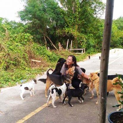 Ajándékokkal halmozza el a hálás kóbor kutya a nőt, aki rendszeresen enni ad neki