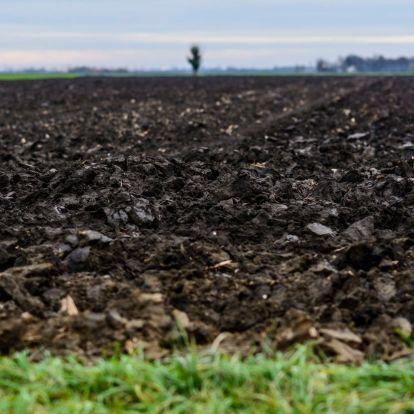 Jelentősen nőtt a termőföld ára