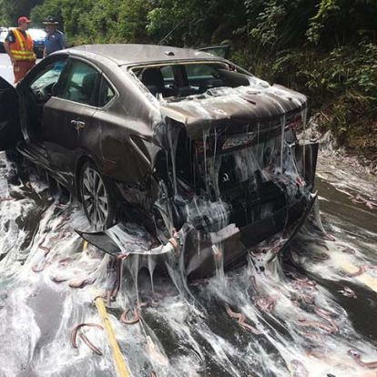 Nyálkatenger árasztotta el az utat, miután felborult egy angolnákat szállító teherautó