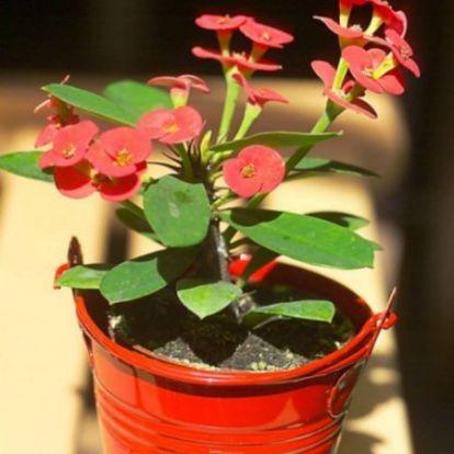 Szárazságtűrő növények – sokat utazóknak
