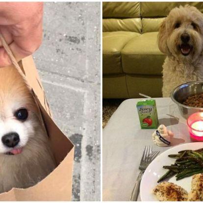 Sztriptíztáncos kutya és még 20 vicces állatos fotó