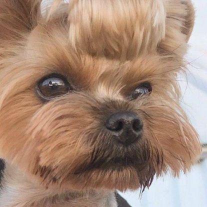 Tolvai Reni kutyája saját Instagram-fiókot kapott