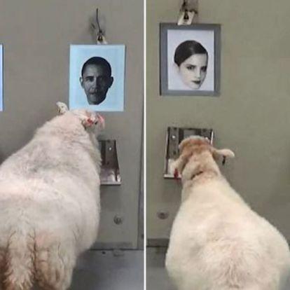 Fotó alapján is képesek felismerni az emberi arcot a juhok
