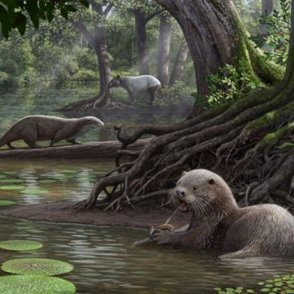 Félelmetes csúcsragadozó volt a Kína területén élt hatalmas ősvidra