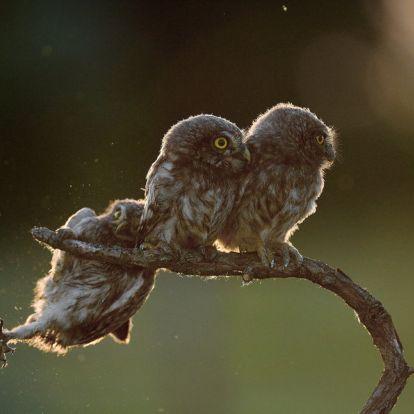 Magyar természetfotós képe nyerte el idén a legviccesebb állatfotó címet