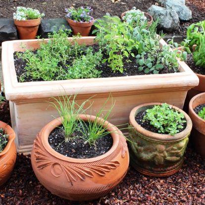 10 fűszernövény, melyeket gond nélkül termeszthet bárki, akár kert nélkül is!