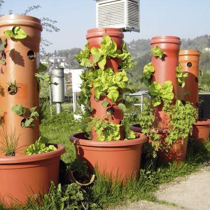 10+1 szakértői tipp a legfinomabb fűszernövények termesztéséhez