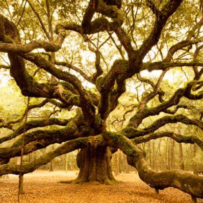 6 gyógyító erejű fa, amiket akár saját kertedben is nevelhetsz!
