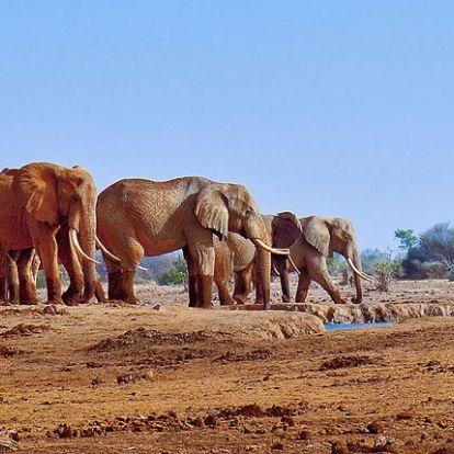 Nyomkövetővel védik az elefántokat Kenyában