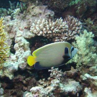 A savasodó óceánvíz felemésztheti a korallzátonyok építőköveit