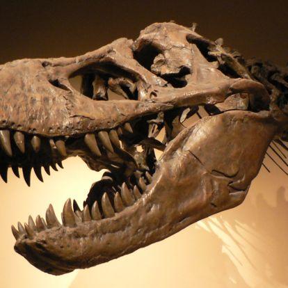 Különleges dinoszaurusz kiállítás nyílik Szegeden