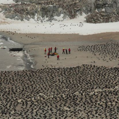 Szenzációs felfedezés – másfél milliós pingvinkolóniát találtak az Antarktiszon