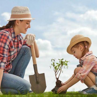 Ültetés áprilisban: mire kell figyelni?