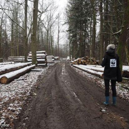 Megmenekülhet a láncfűrészektől Európa leghíresebb őserdeje