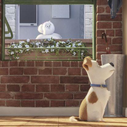 Mit csinál a kutya, amikor otthon hagyják egyedül?