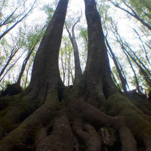 A fáknak is van pulzusuk