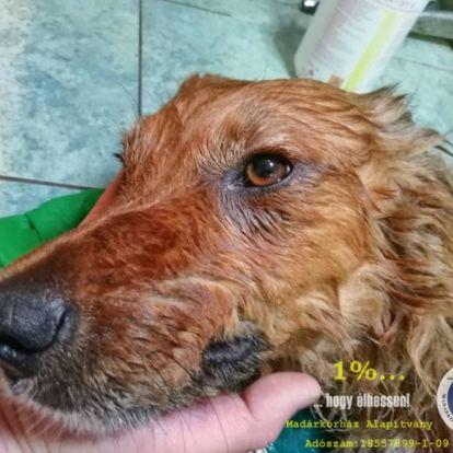 Perceken múlt egy autóban hagyott kutya élete Hortobágyon