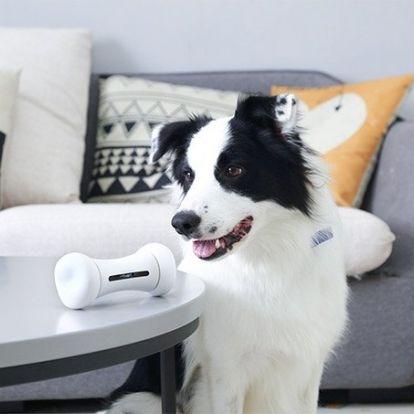 Sosem fog unatkozni a kutyád, ha van okos csontja!