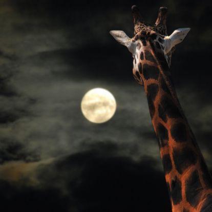Éjszaka a dzsungelben, avagy a Fővárosi Állatkertben