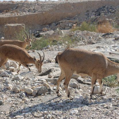 Izraeli oázis a sivatag közepén!