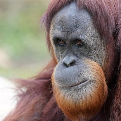 Háromszáz felfedezetlen emlősfaj maradhatott