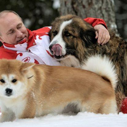 Kutyamentes orosz foci VB