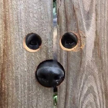 Hogyan előzd meg, hogy átlyukaszd a falat a szomszéd felé?