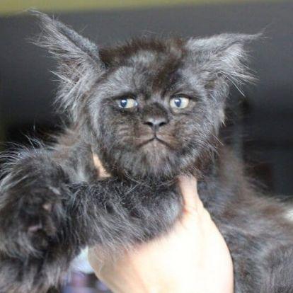 Az emberarcú cica az internet legújabb sztárja
