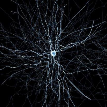 Szuperszámítógép szimulálja egy egér agyát