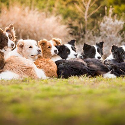 Az év legjobb kutyafotói