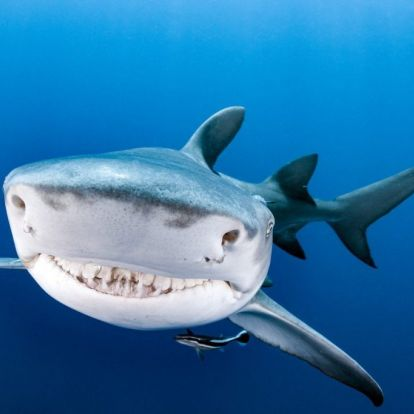 A legszebb mosolyú cápa | Marie Claire