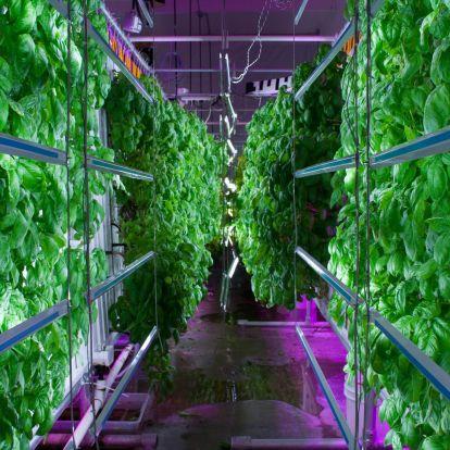 Zöldségtermesztés 99 százalékos vízspórolás mellett