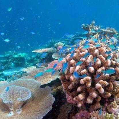 Mesterséges intelligencia elemez korallzátonyokat