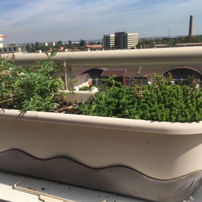 Őszi balkon upgrade