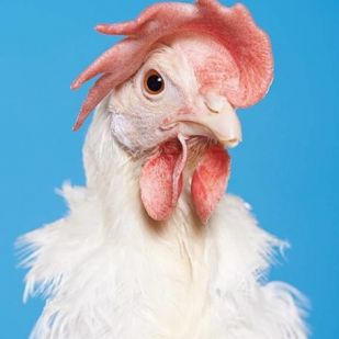 Génmódosított csirkék és Szisziphus: MOME-s sikerek a párizsi Gare du Nordon