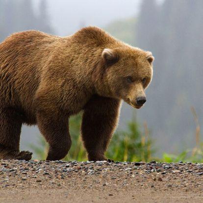 Medve etikett: ezt tedd, ha macival találkozol