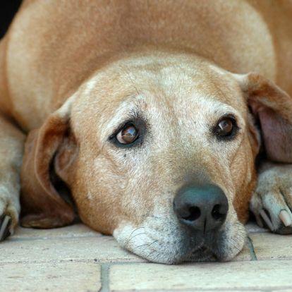 A kutyatartók egészségesebbek?