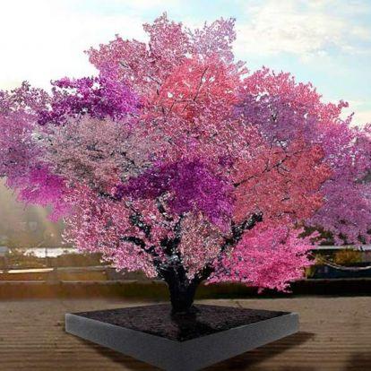 40 különböző gyümölcsöt terem egy fa